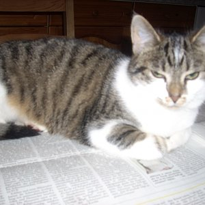 Baby liest meine Zeitung