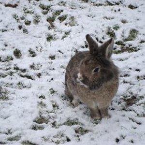 erster schnee, november 2010. Stupsy