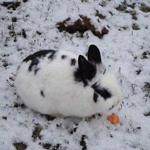 erster schnee, november 2010. Bunny