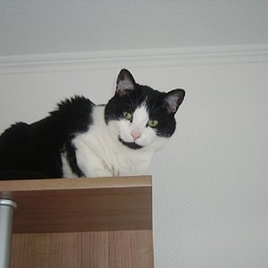 Felina auf ihrem Lieblingsplatz :-)